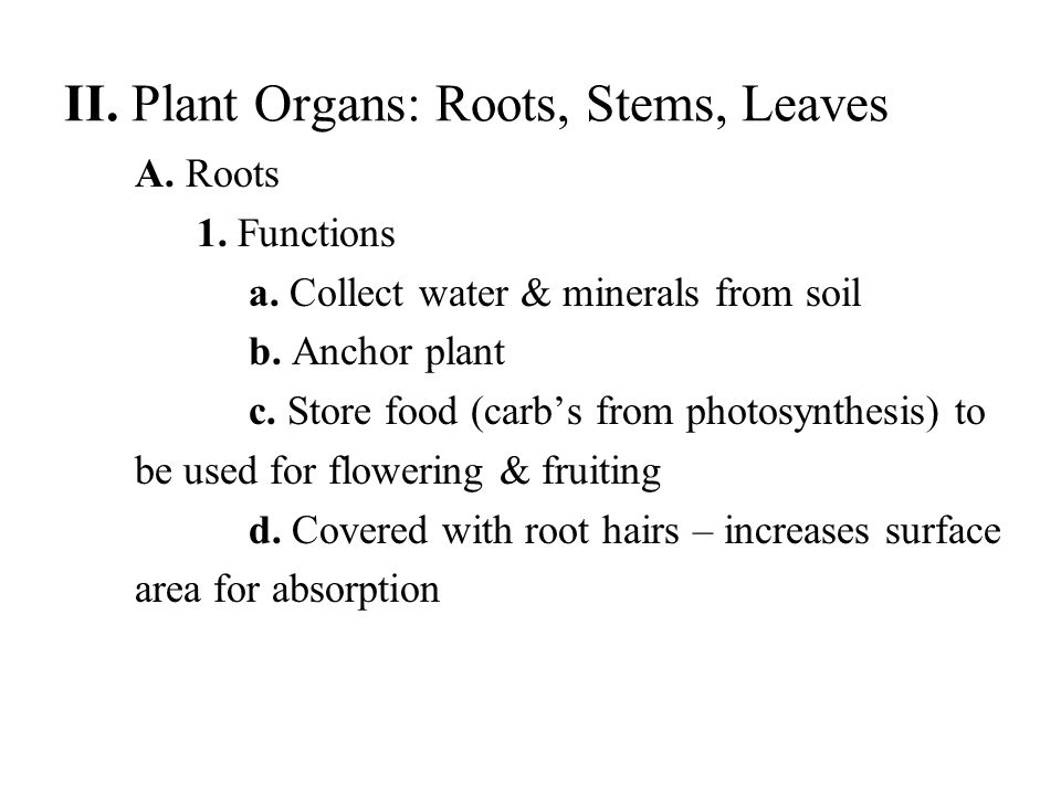 II. Plant Organs: Roots, Stems, Leaves