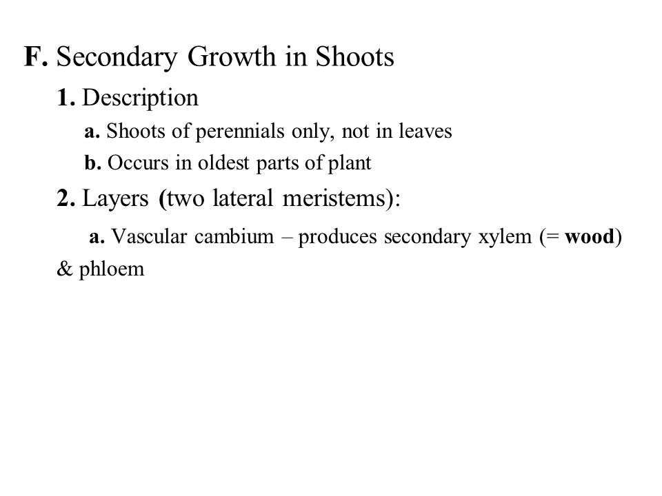 F. Secondary Growth in Shoots