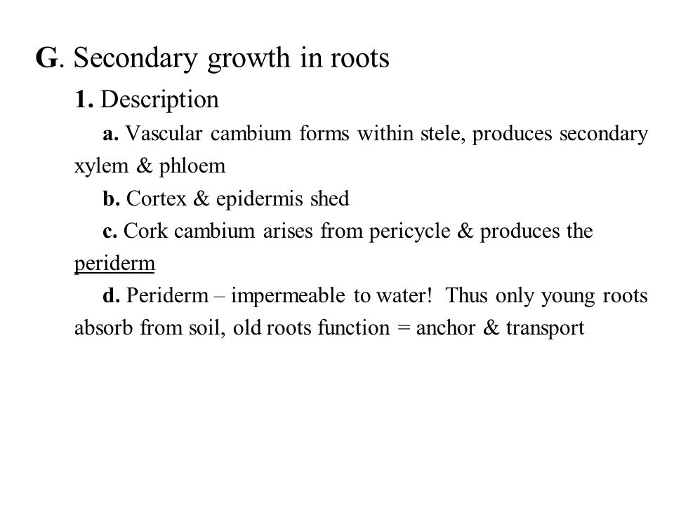 G. Secondary growth in roots