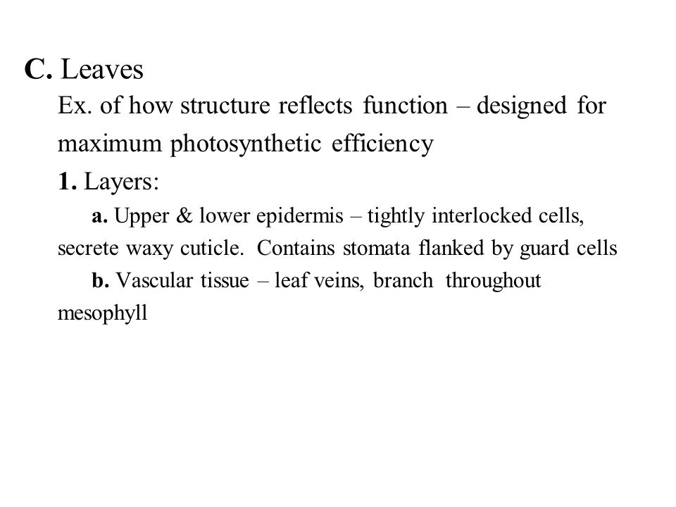 C. Leaves Ex. of how structure reflects function – designed for