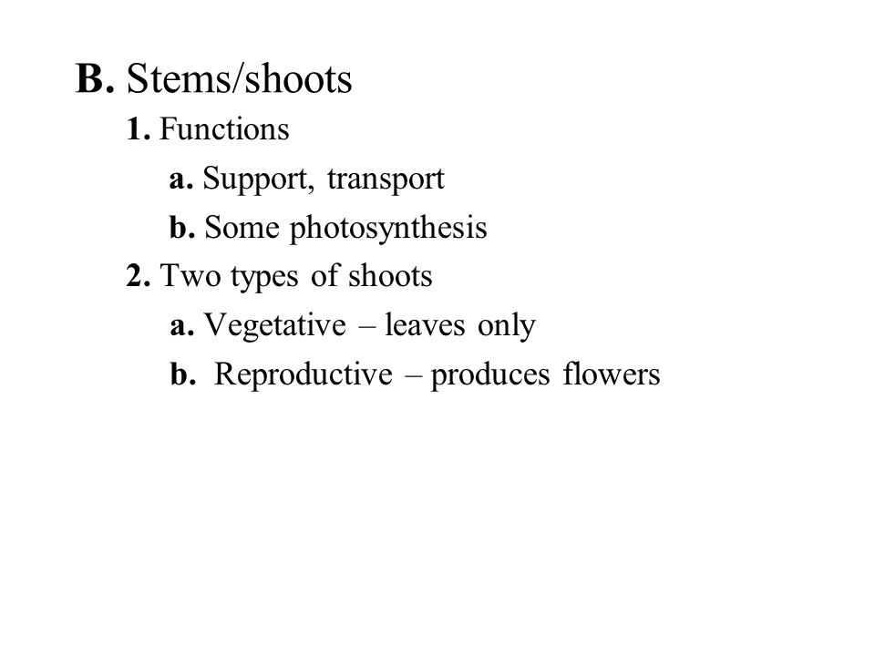 B. Stems/shoots 1. Functions a. Support, transport