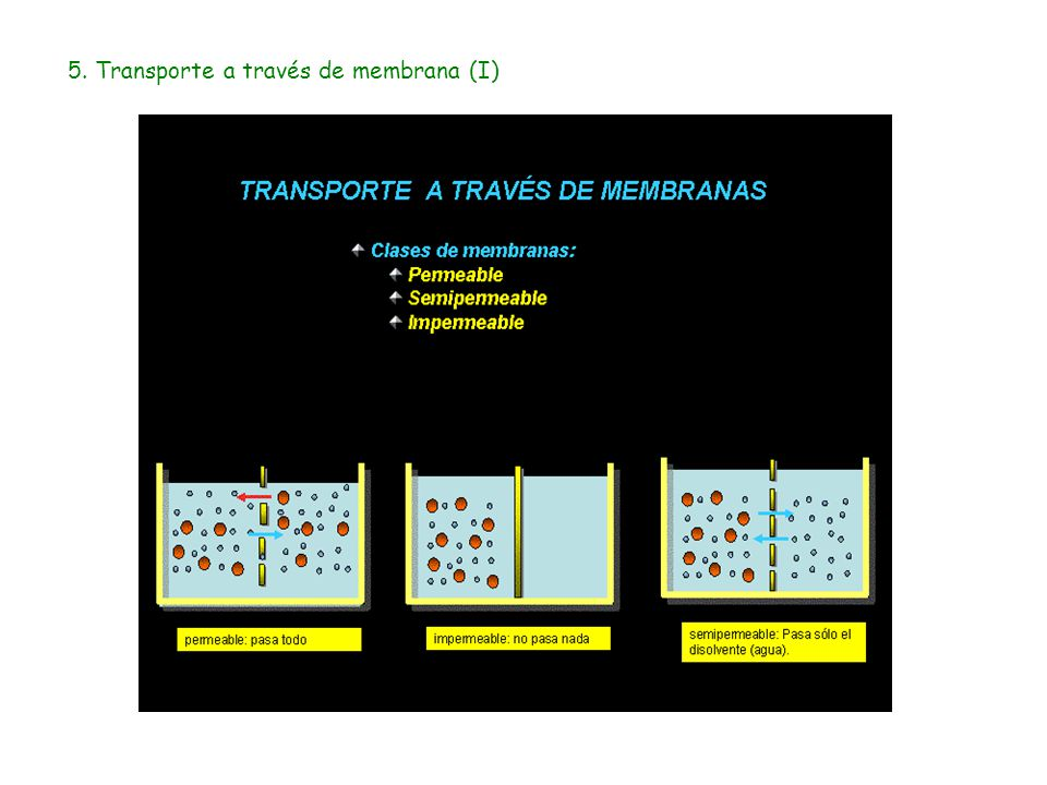 5. Transporte a través de membrana (I)