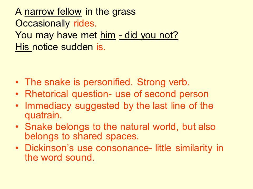A narrow fellow in the grass