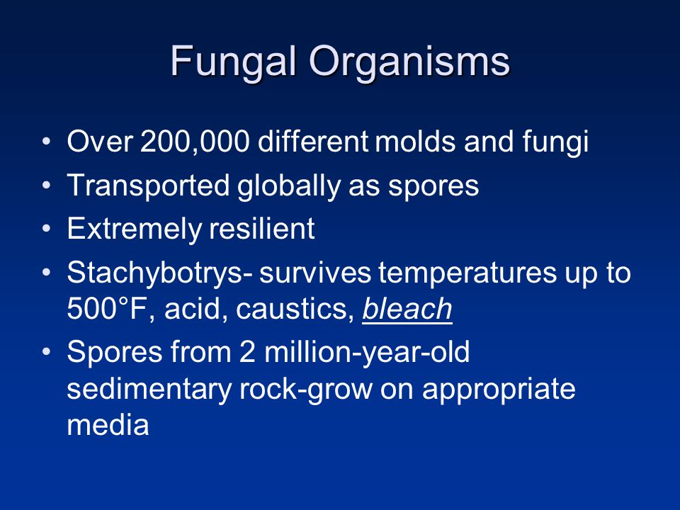 Fungal Organisms Over 200,000 different molds and fungi