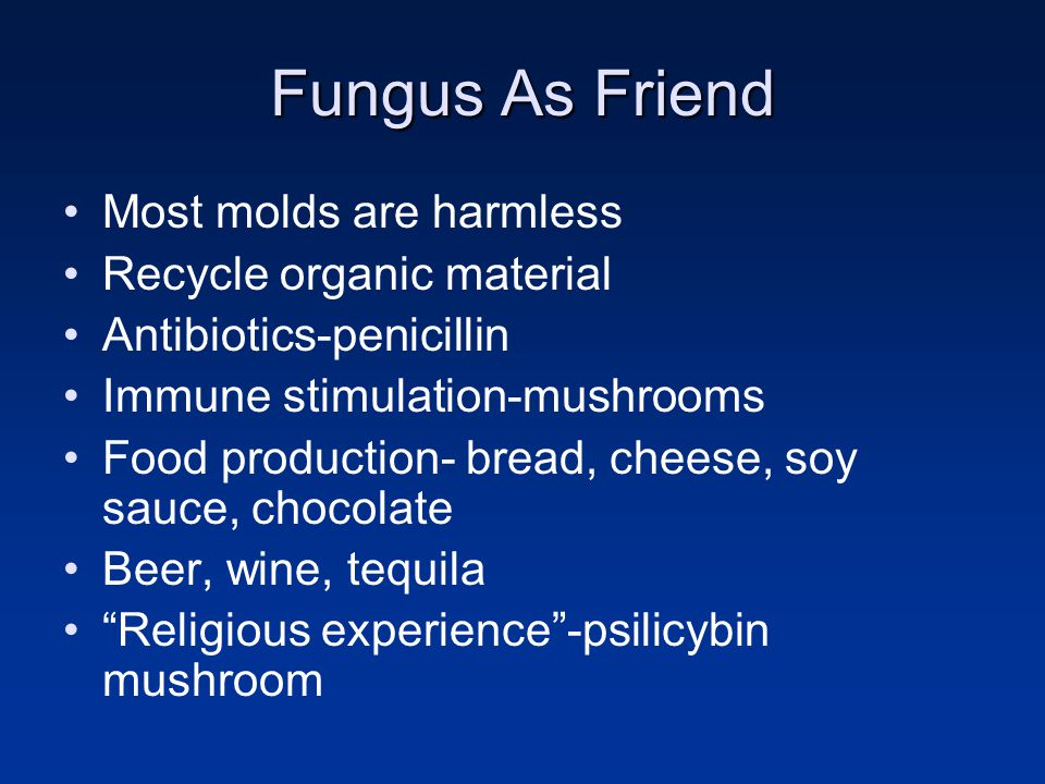 Fungus As Friend Most molds are harmless Recycle organic material