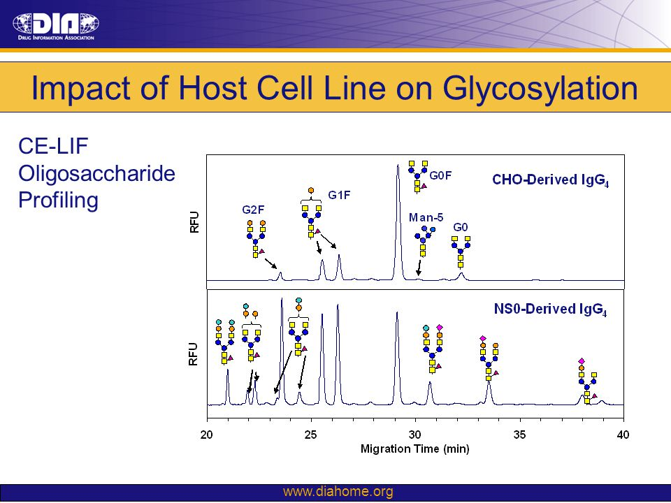 Impact of Host Cell Line on Glycosylation