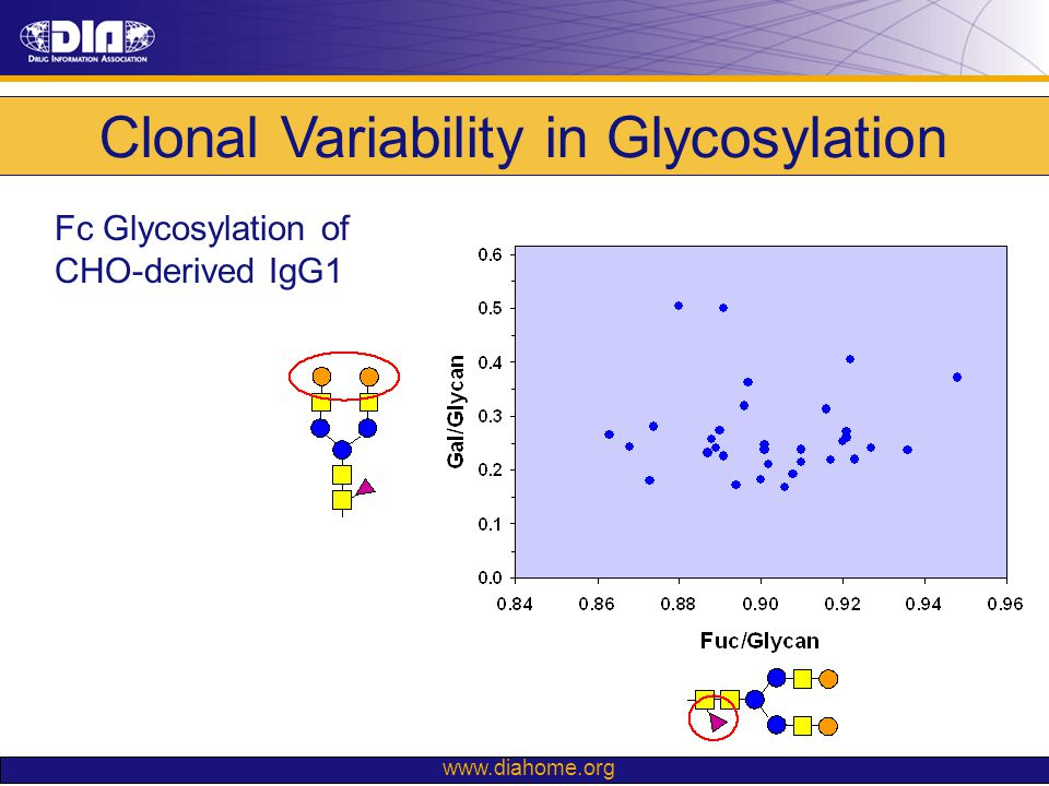 Clonal Variability in Glycosylation