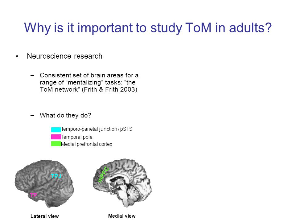 Why is it important to study ToM in adults