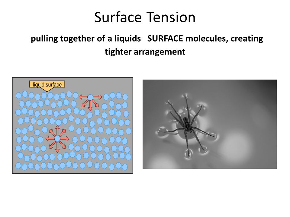 Surface Tension pulling together of a liquids SURFACE molecules, creating tighter arrangement