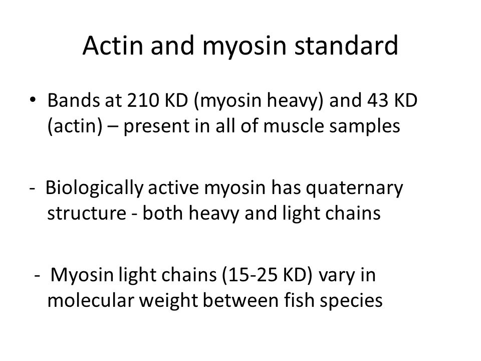 Actin and myosin standard