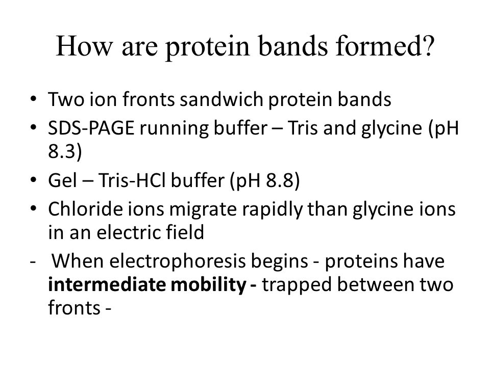 How are protein bands formed