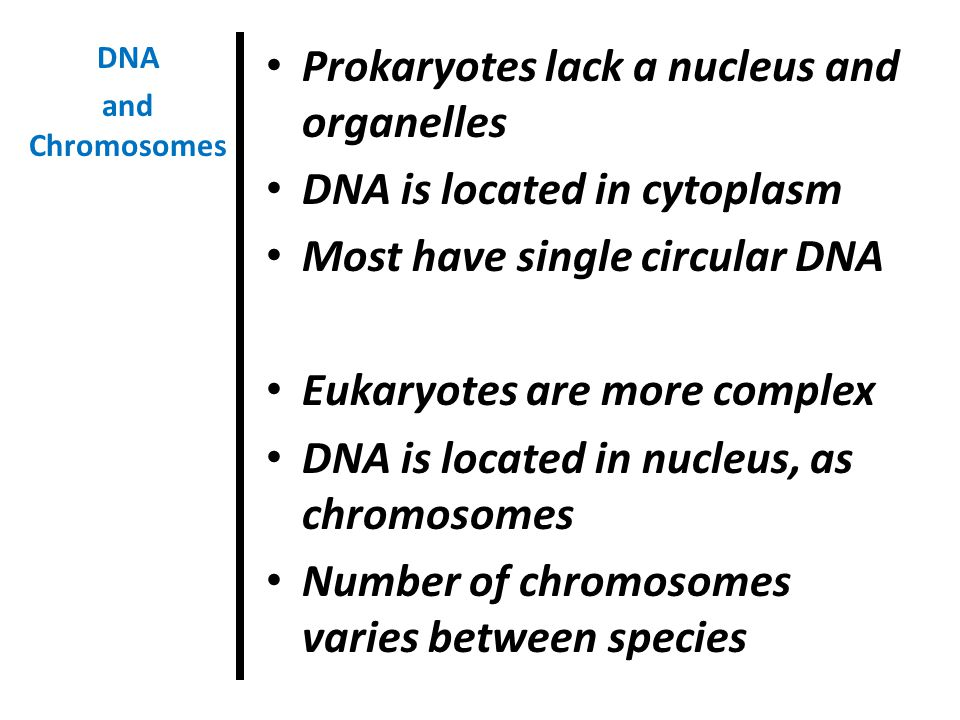 Prokaryotes lack a nucleus and organelles DNA is located in cytoplasm