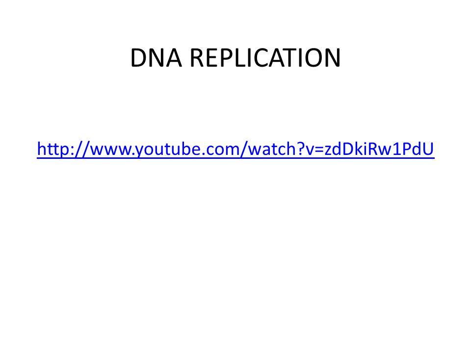 DNA REPLICATION http://www.youtube.com/watch v=zdDkiRw1PdU
