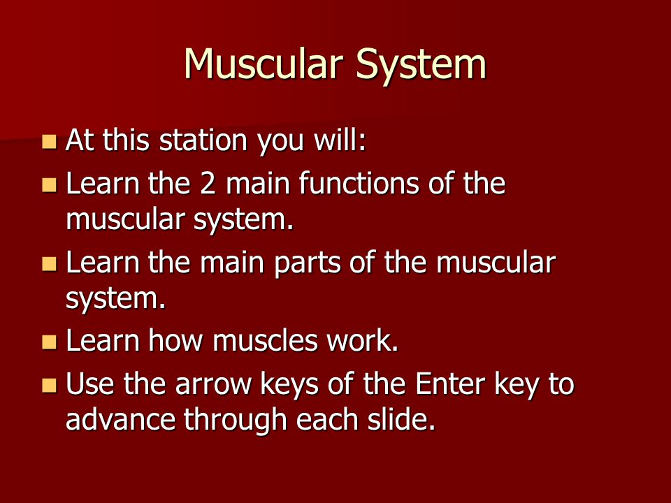 Muscular System At this station you will: