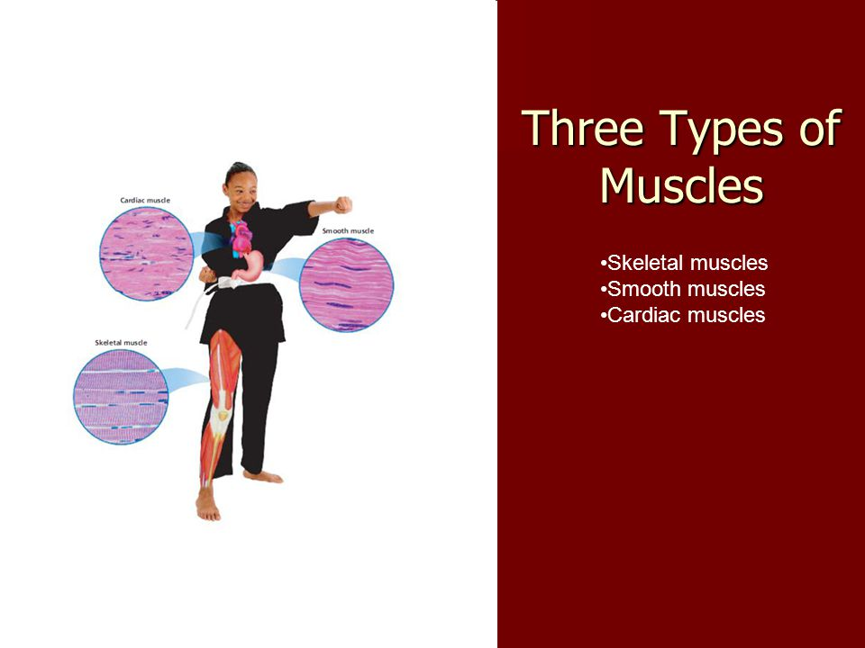 Three Types of Muscles Skeletal muscles Smooth muscles Cardiac muscles