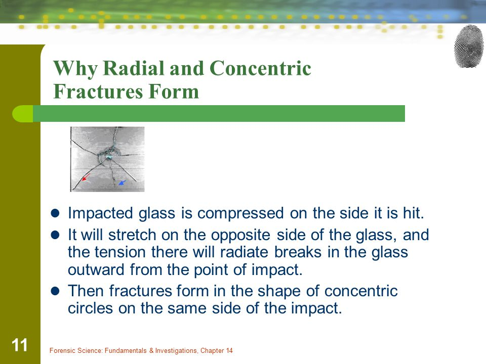 Why Radial and Concentric Fractures Form