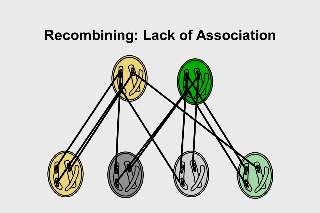 Recombining: Lack of Association