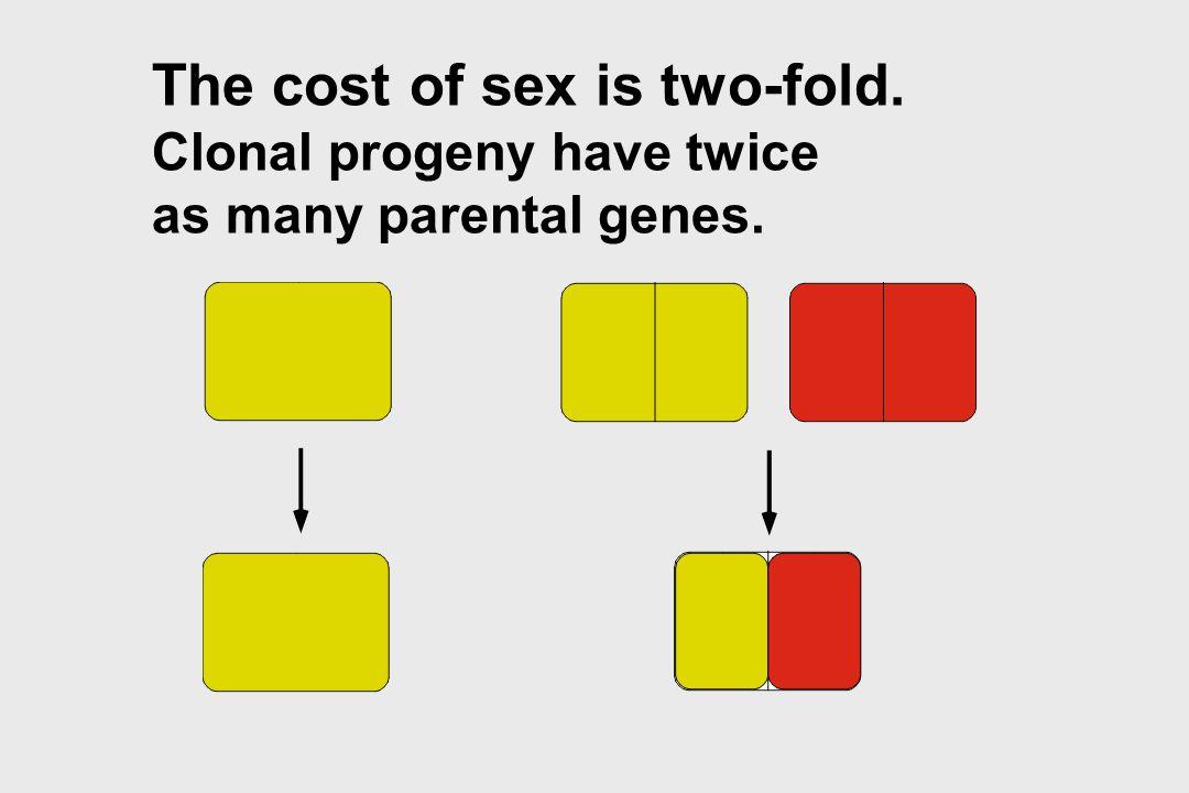 The cost of sex is two-fold.