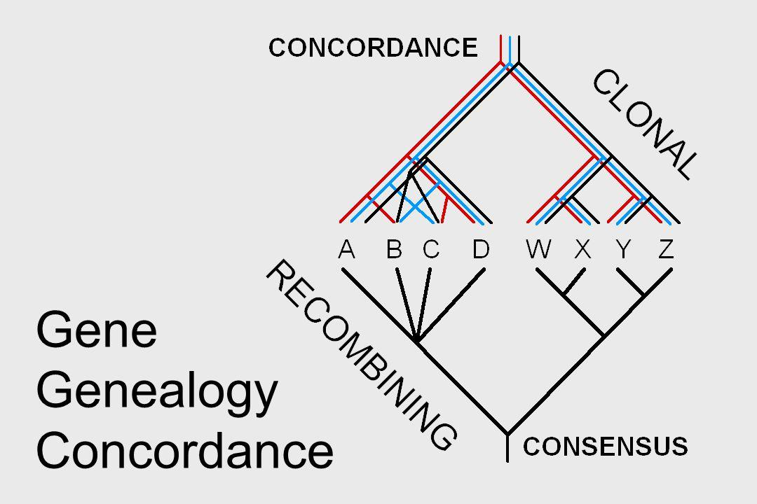 Gene Genealogy Concordance