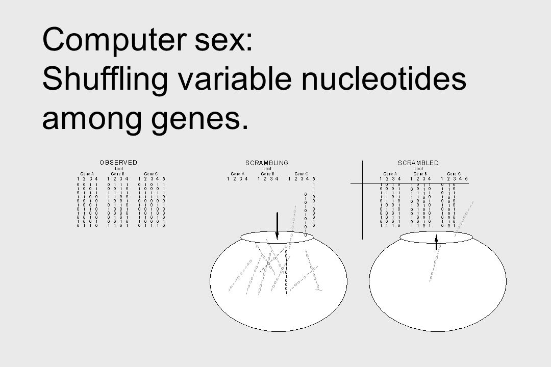Computer sex: Shuffling variable nucleotides among genes.