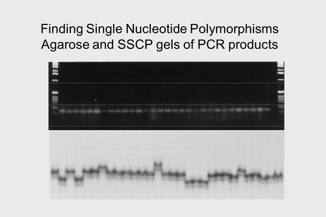 Finding Single Nucleotide Polymorphisms