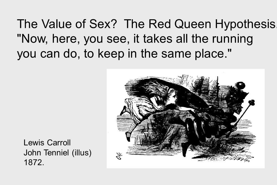 The Value of Sex The Red Queen Hypothesis.