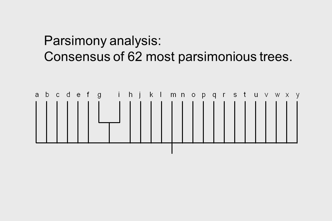 Parsimony analysis: Consensus of 62 most parsimonious trees.
