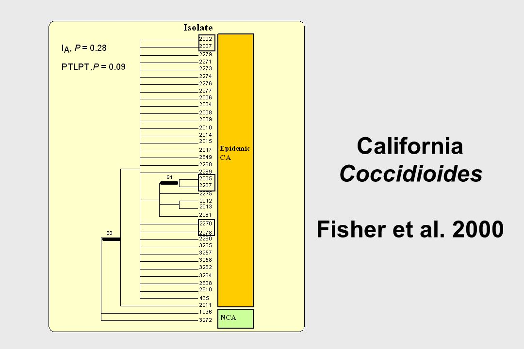 California Coccidioides Fisher et al. 2000