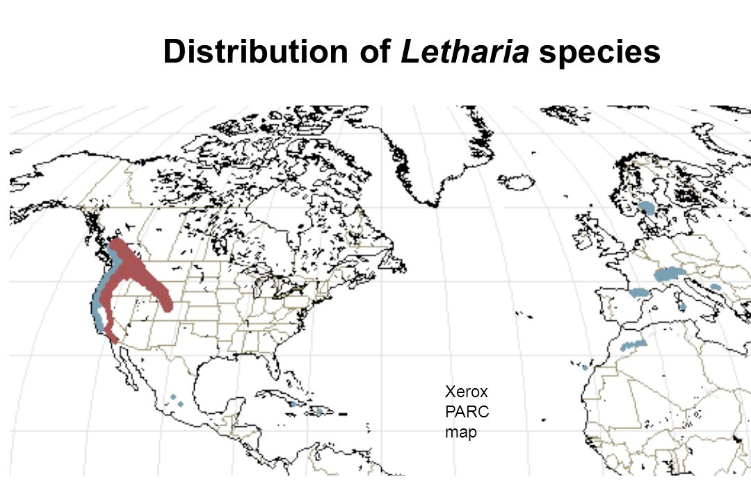 Distribution of Letharia species
