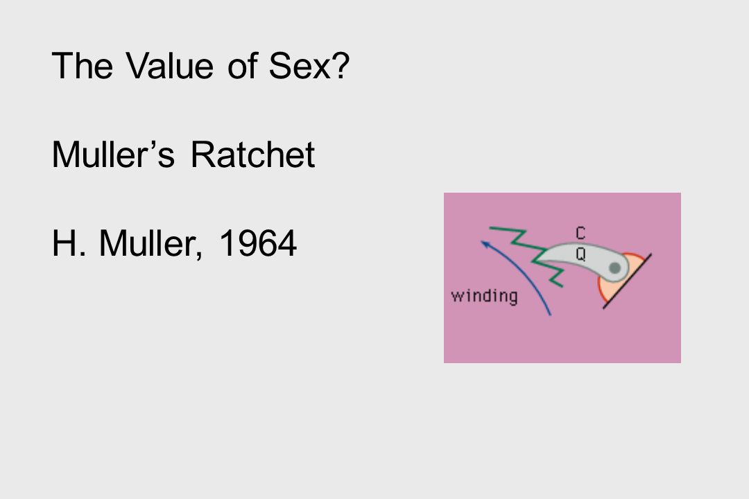 The Value of Sex Muller's Ratchet H. Muller, 1964