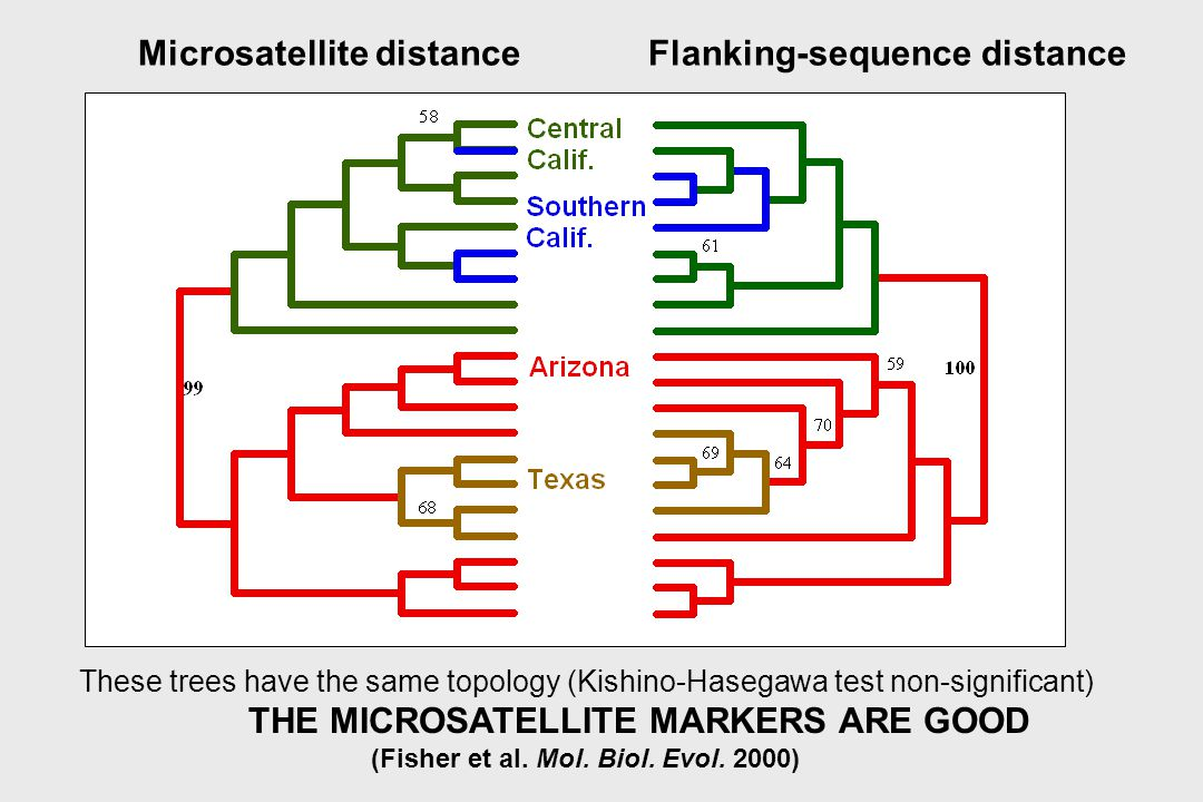 Microsatellite distance Flanking-sequence distance