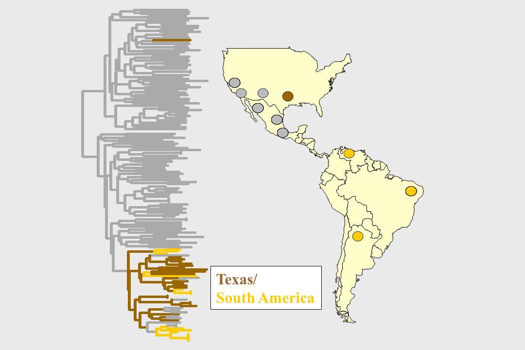 Texas/ South America