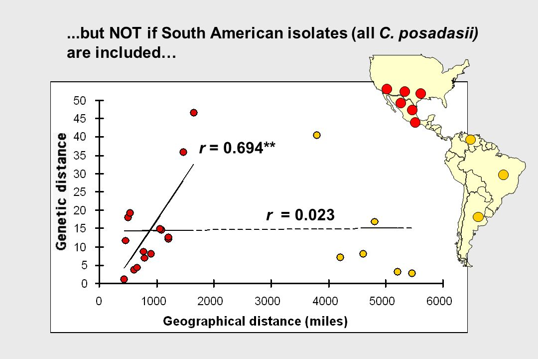 ...but NOT if South American isolates (all C. posadasii)