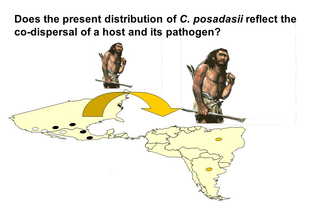 Does the present distribution of C. posadasii reflect the
