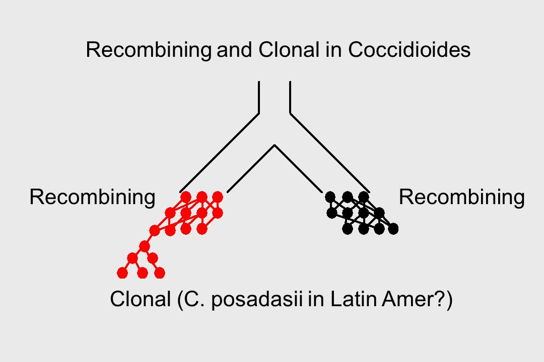 Recombining and Clonal in Coccidioides