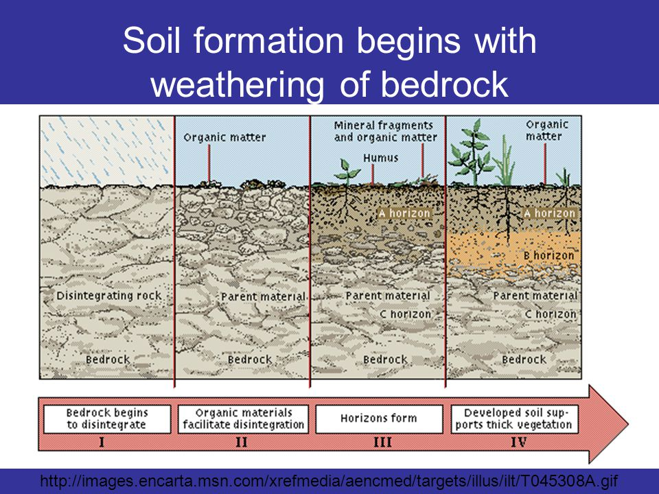Soil formation begins with weathering of bedrock