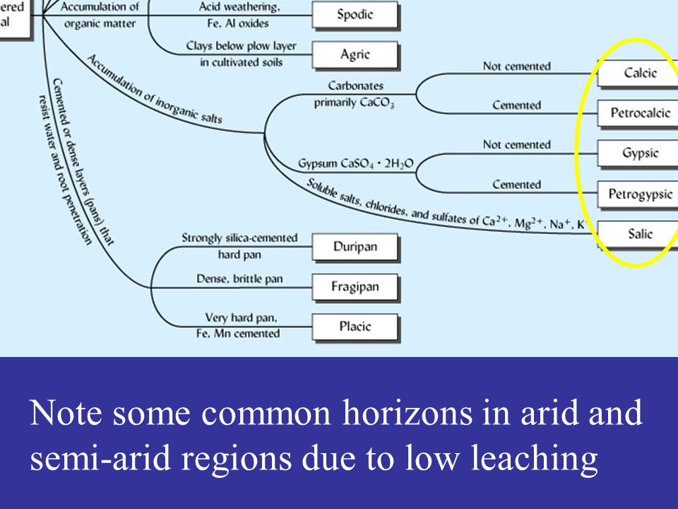 Note some common horizons in arid and semi-arid regions due to low leaching
