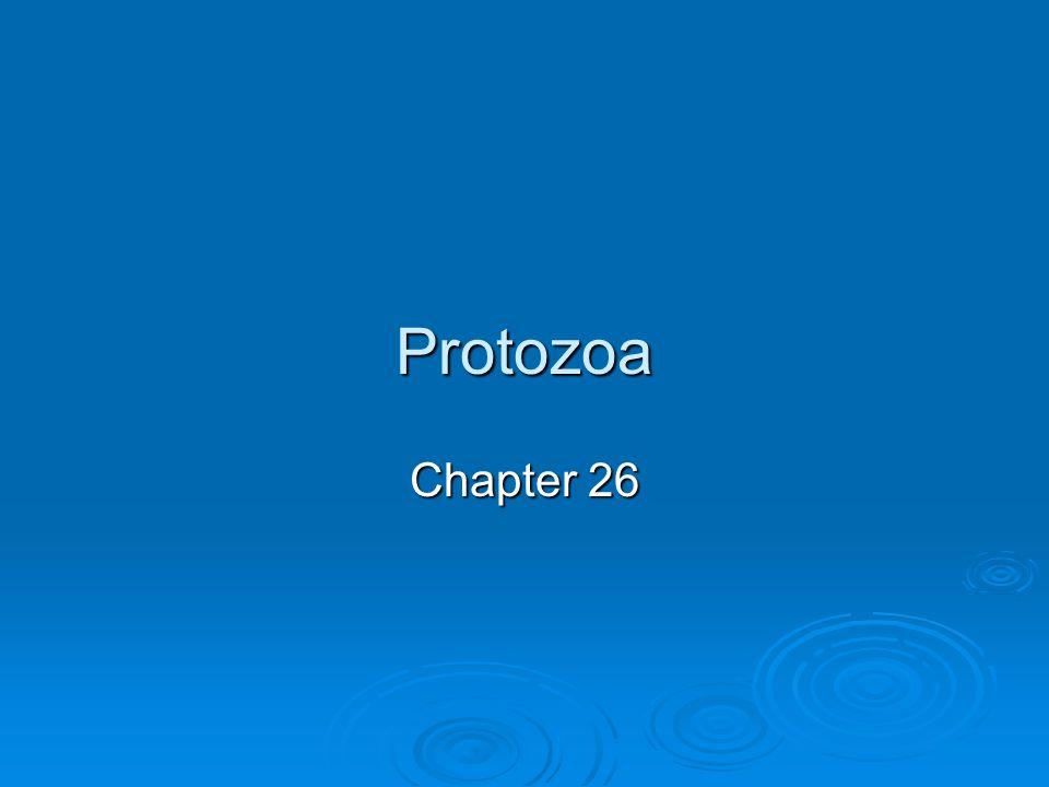 Protozoa Chapter 26