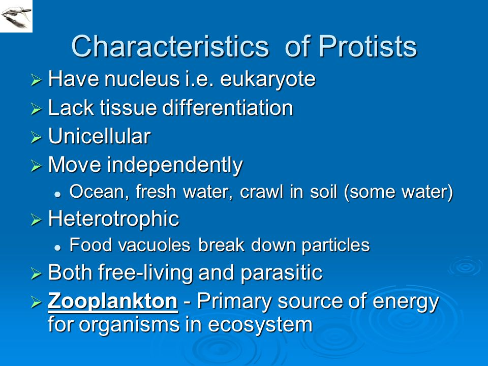 Characteristics of Protists