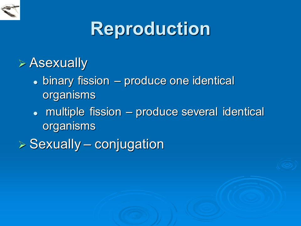 Reproduction Asexually Sexually – conjugation