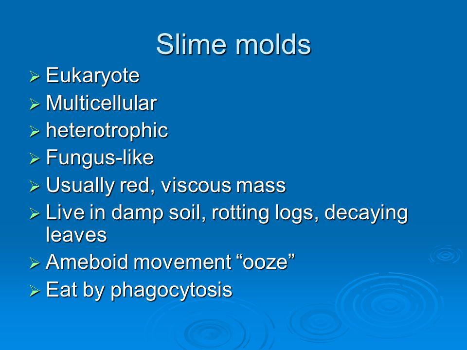 Slime molds Eukaryote Multicellular heterotrophic Fungus-like