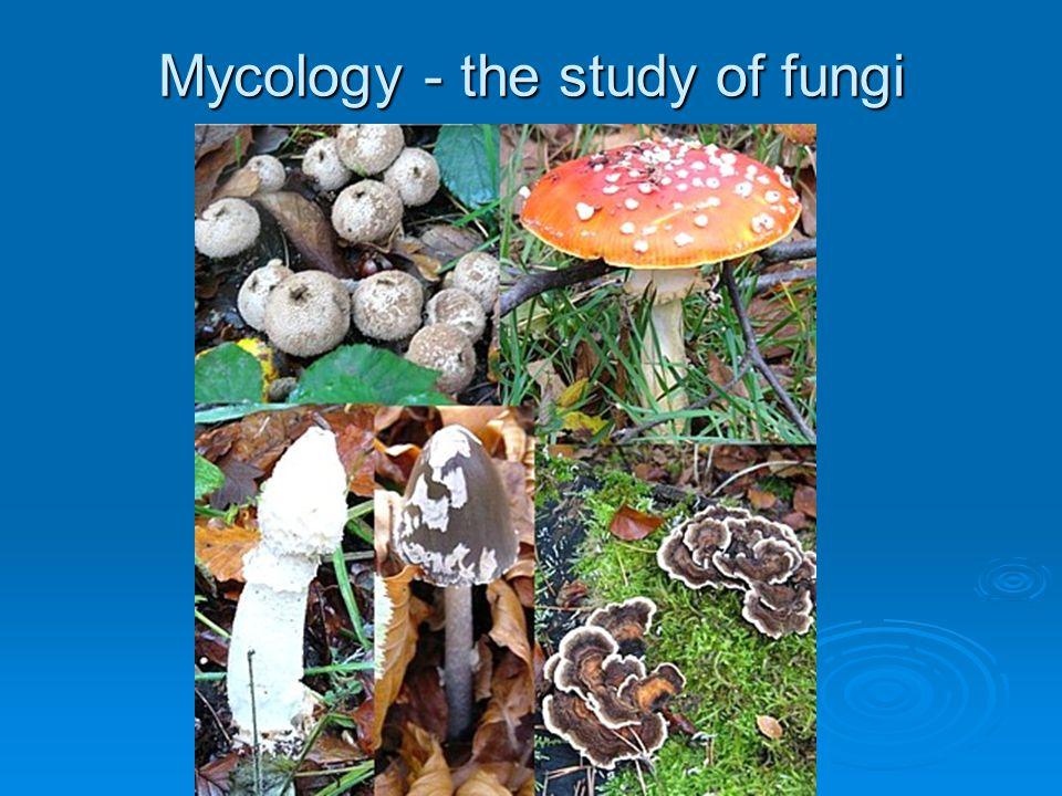 Mycology - the study of fungi