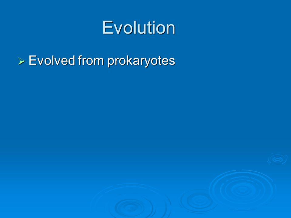 Evolution Evolved from prokaryotes