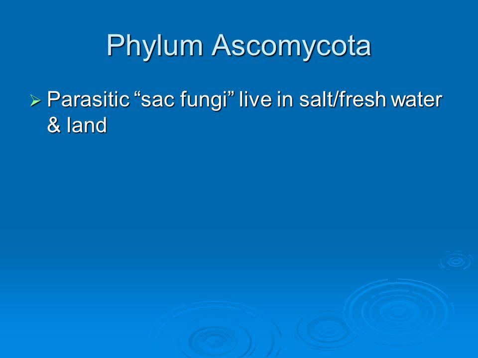 Phylum Ascomycota Parasitic sac fungi live in salt/fresh water & land