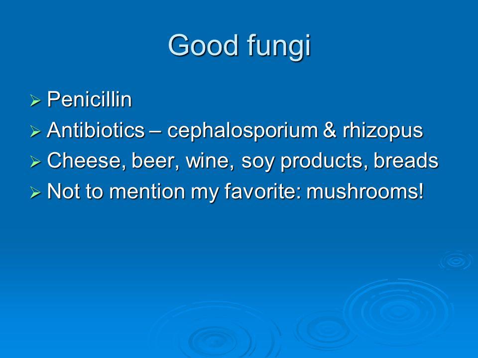 Good fungi Penicillin Antibiotics – cephalosporium & rhizopus