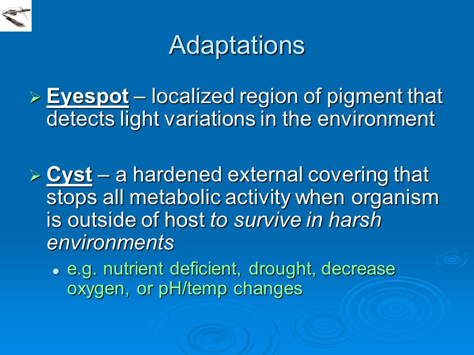 Adaptations Eyespot – localized region of pigment that detects light variations in the environment.