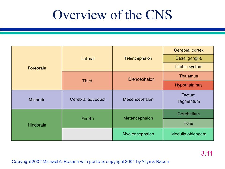 Overview of the CNS 3.11