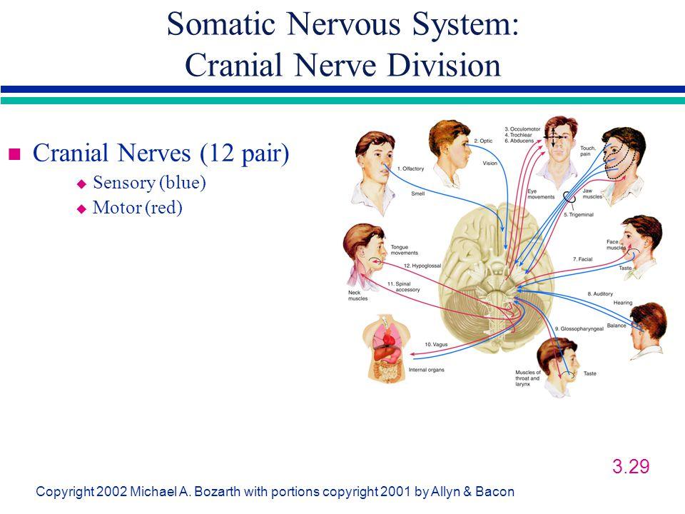 Somatic Nervous System: Cranial Nerve Division