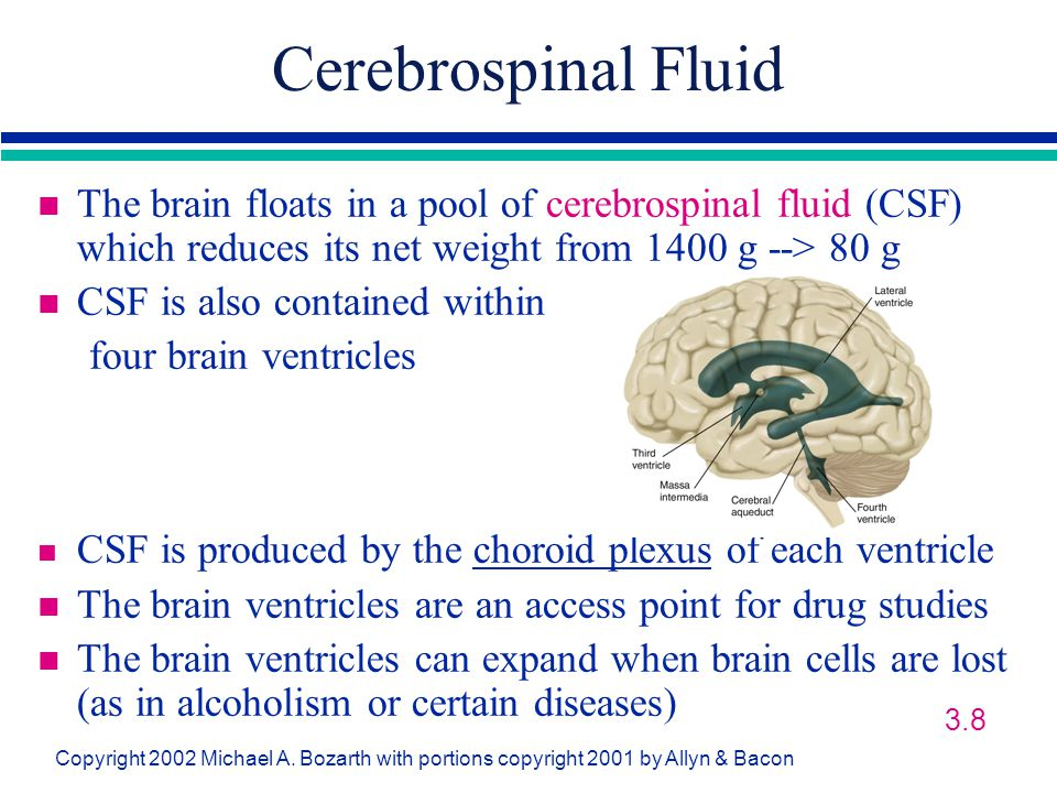 Cerebrospinal Fluid The brain floats in a pool of cerebrospinal fluid (CSF) which reduces its net weight from 1400 g --> 80 g.