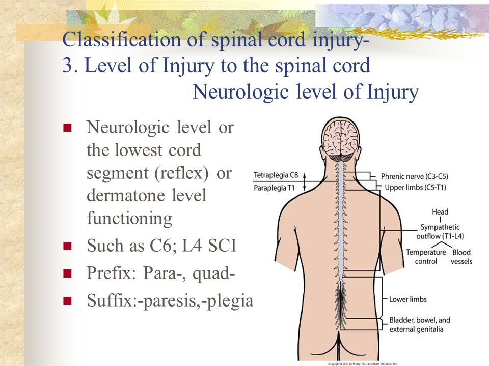 Classification of spinal cord injury- 3